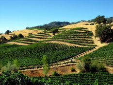 Autumn Wine Series: Alexander Valley Cabs
